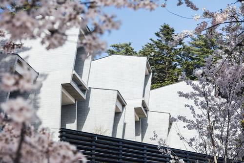 The cabins covered in cherry blossoms