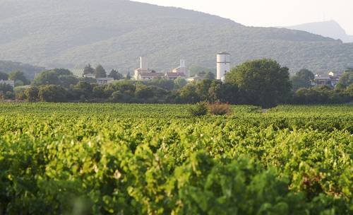 Some of the nearby wineries